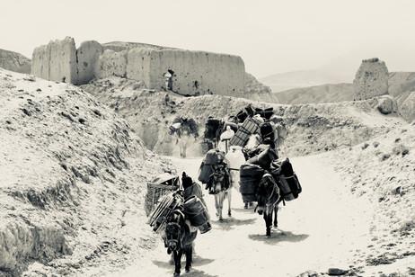 Caravan - Choser, Mustang