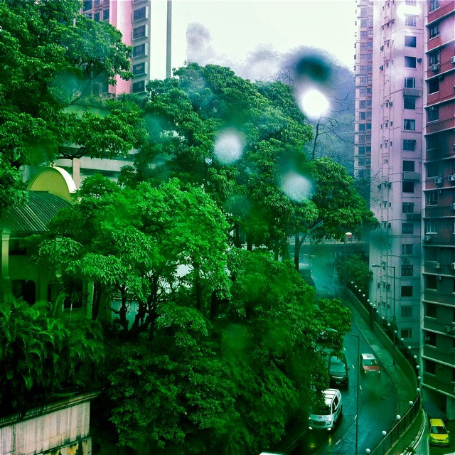 Greens, rain, and Hong Kong's heat and generosity host our preparations.
