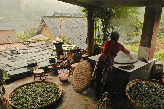 The Fry (Puerh) - Yiwu, Yunnan