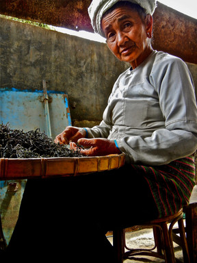 Family Affair - Jing Mai, Yunnan