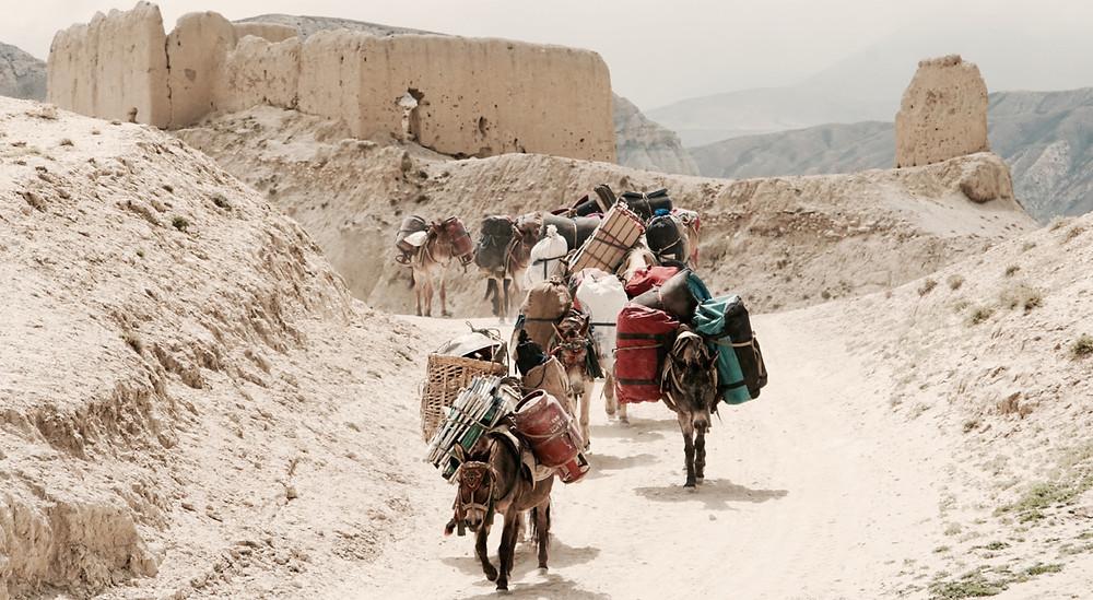 Mule team in Himalayas - The Tea Explorer