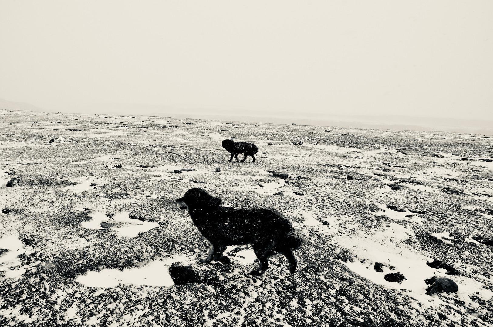 Blizzard Beginnings and Mastiffs