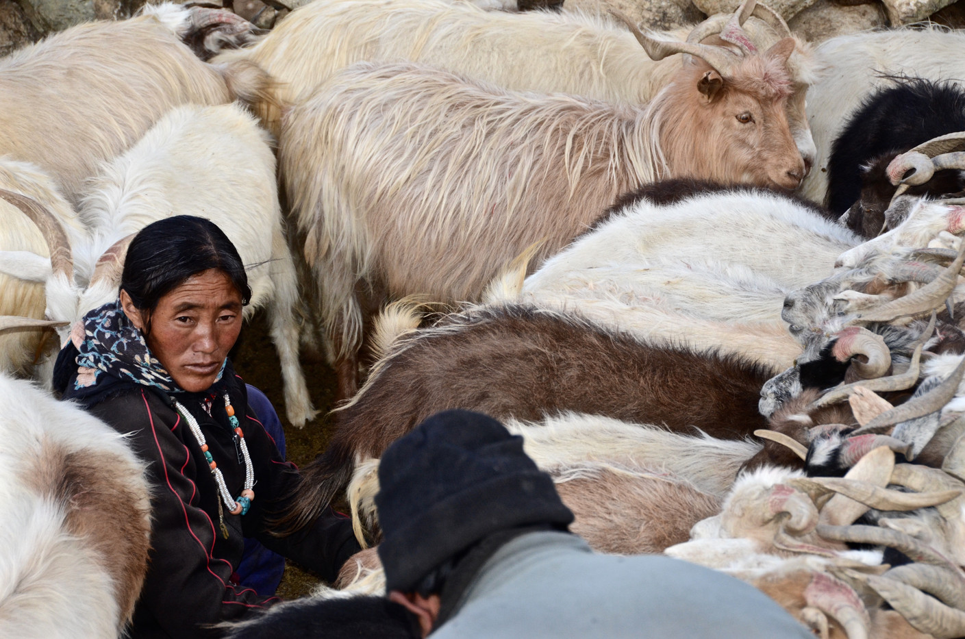 Pashmina - Ladakh