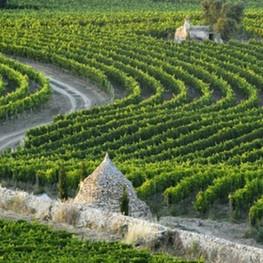 Vineyard Strolls