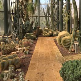 Botanical dream