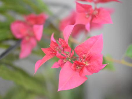 ココロに花を♡