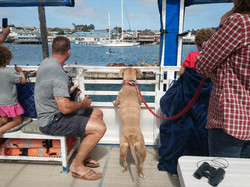 Harbor tour on a pontoon boat