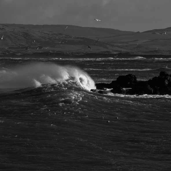sea--shore-18.jpg