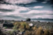 untitled-246_edited.jpg