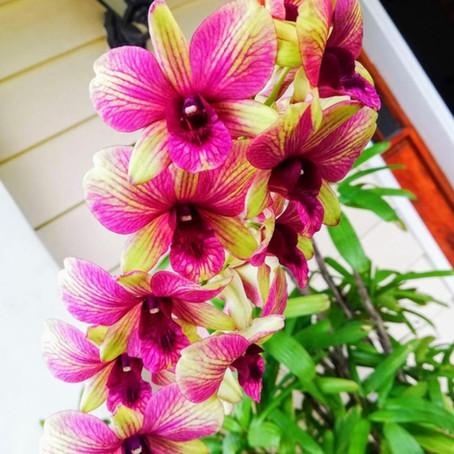 """flowers always make me smile"""