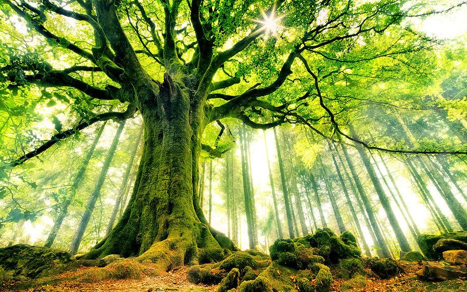 beautiful-strange-tree-wide-1200x750.jpg