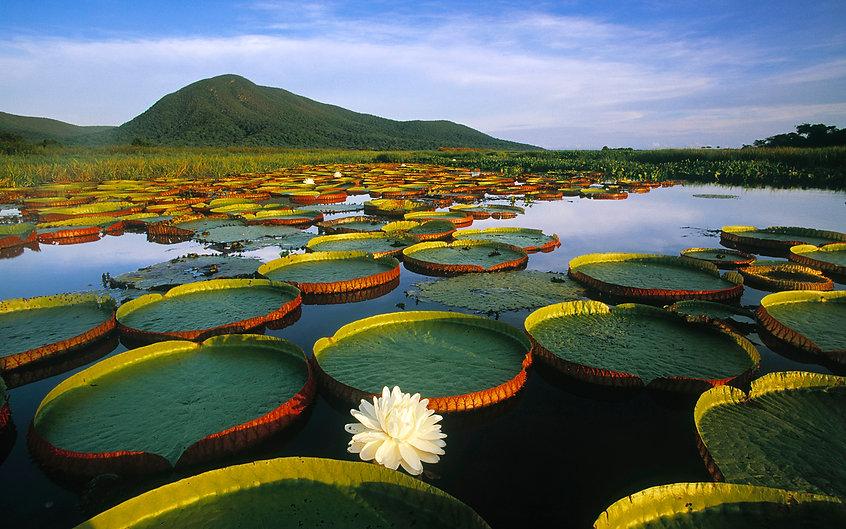 Pantanal1.jpg