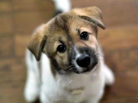 What impact does a Pet have in our Home?