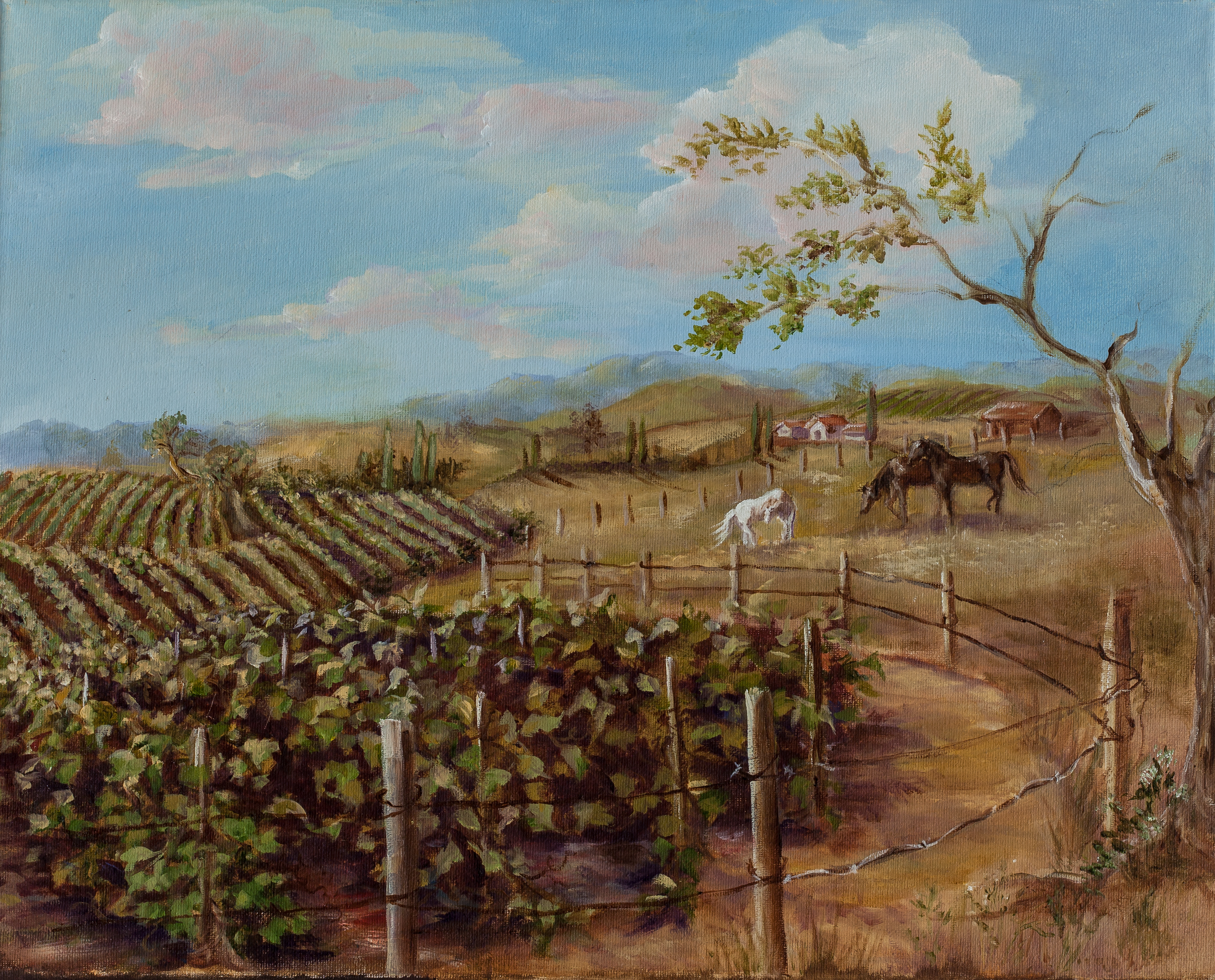 TEMECULA VINEYARD RANCH 1