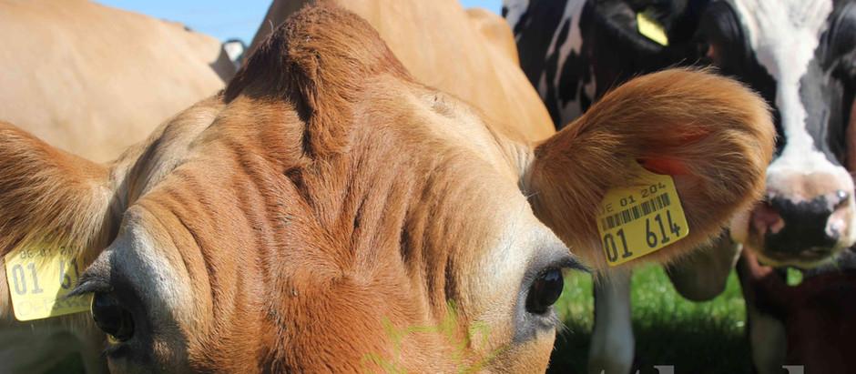 """Ab August: DLG-Intensivseminar """"Herdenmanager Milchvieh"""""""