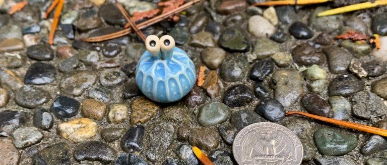 Scott Livesay Urchin -Light Blue