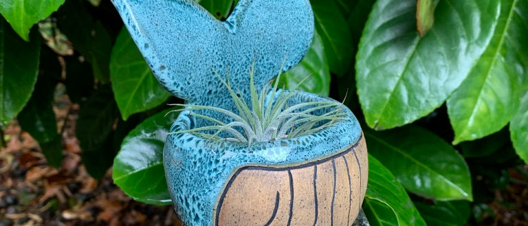 Janicek Pottery Whale Pot - With Airplant