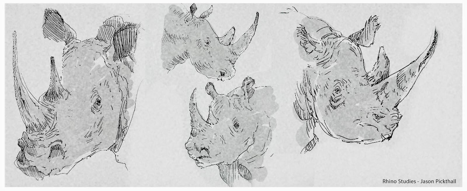 Rhino_Studies