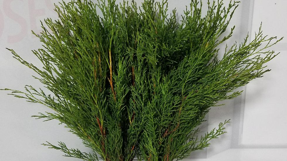 Cypress Pine per Box
