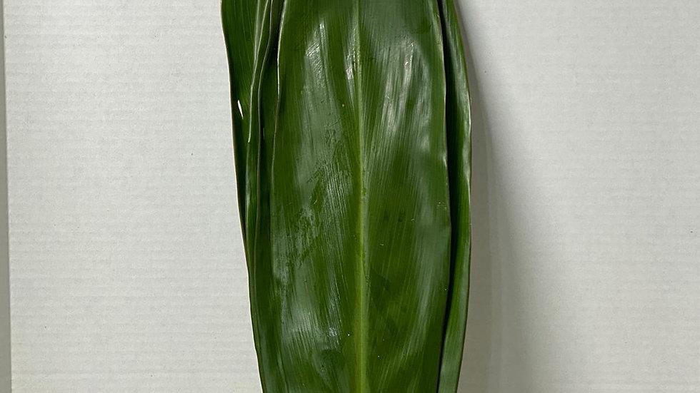Ti Leaves Green