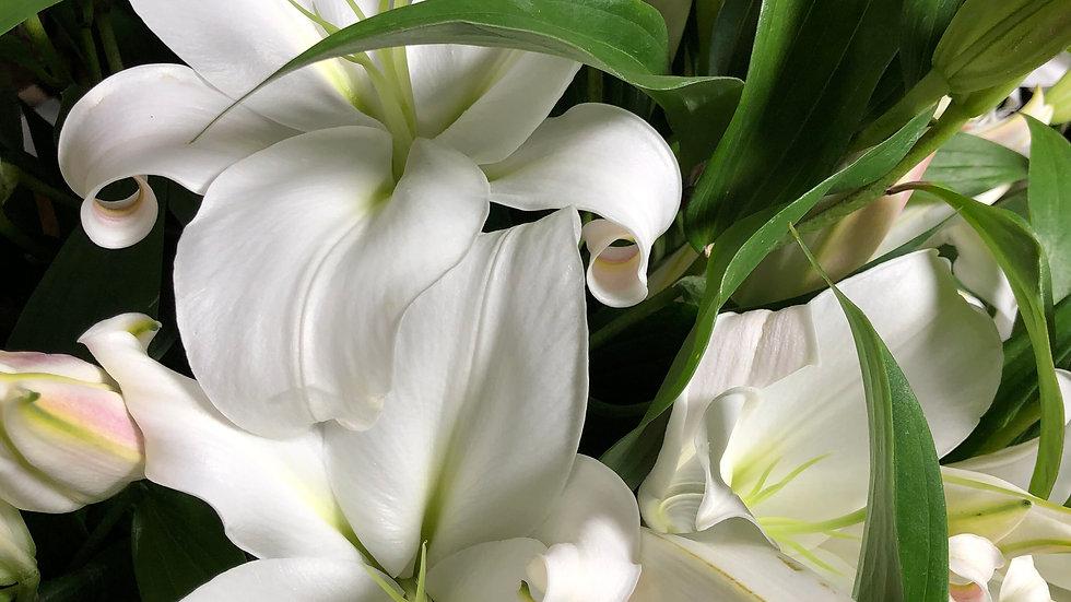 Oriental Lilies White per Bunch