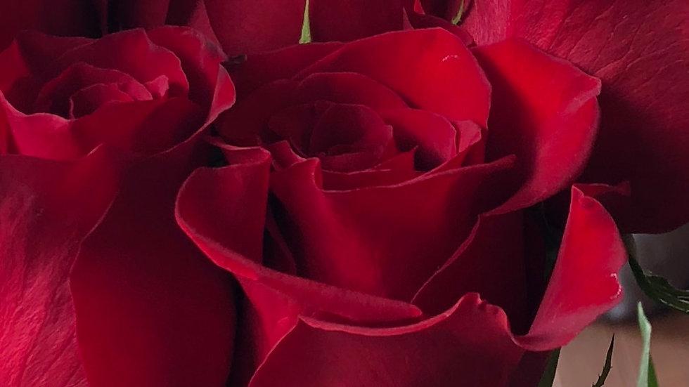 Roses Red (50 cm) 100 Stems x Box