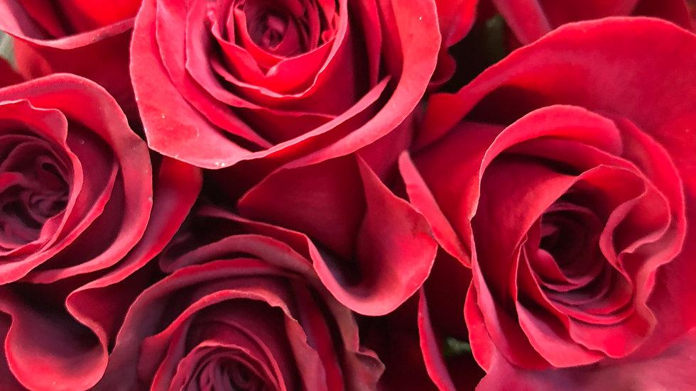 Red Roses (50 cm) 100 Stems