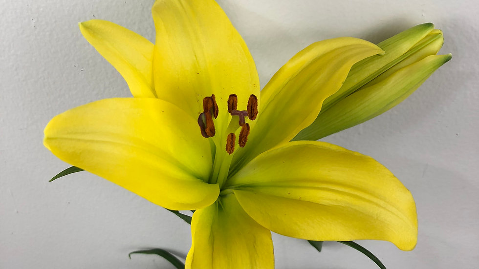 Asiatic Lilies 60 stems x Box