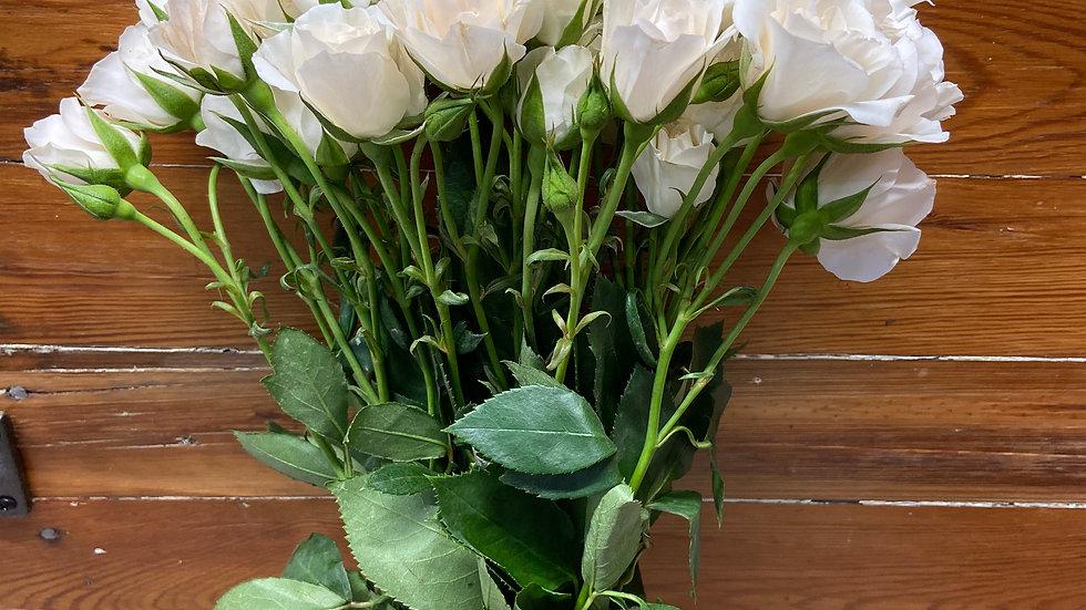 Spray Roses 120 stems x Box