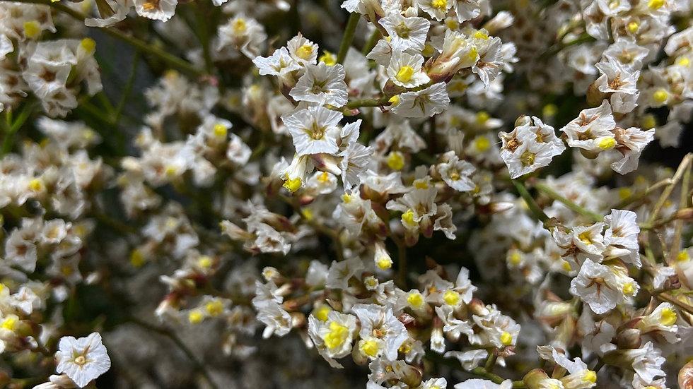 Limonium 10 stems per Bunch