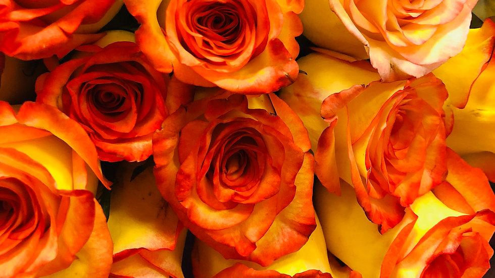 Roses Per Dozen 50cm