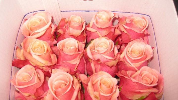 Roses 50cm   *200 Stems Special*