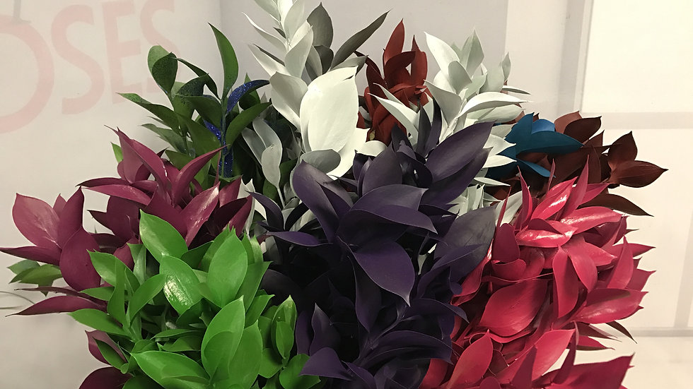 Dyed Ruscus