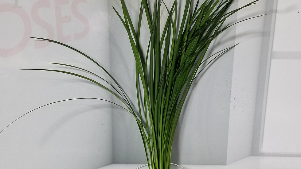 Lily Grass 50 stems x Bunch