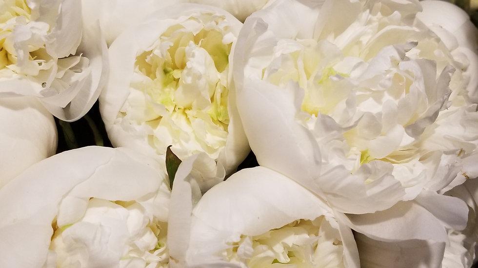 Peony White 5 stems per Bunch