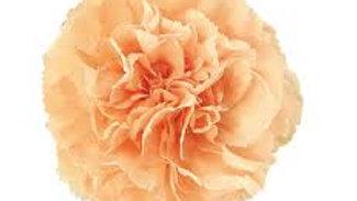 Carnations 200 stems per Box