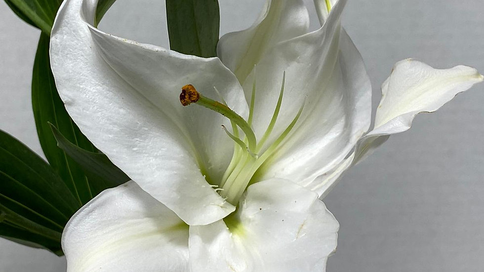 Oriental Lilies White 60 stems Per Box