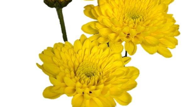 Pompom Cushion Yellow