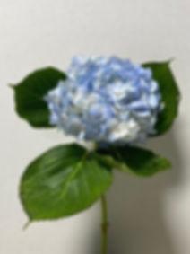 Blue Premium Designer.jpg