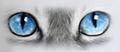 occhi gatto.png