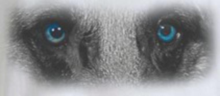 Anaplasma- Ehrlichia -Leishmania Ab- Filaria Ag
