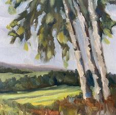 Birch Views