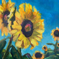 Sunflowers in Bloom I