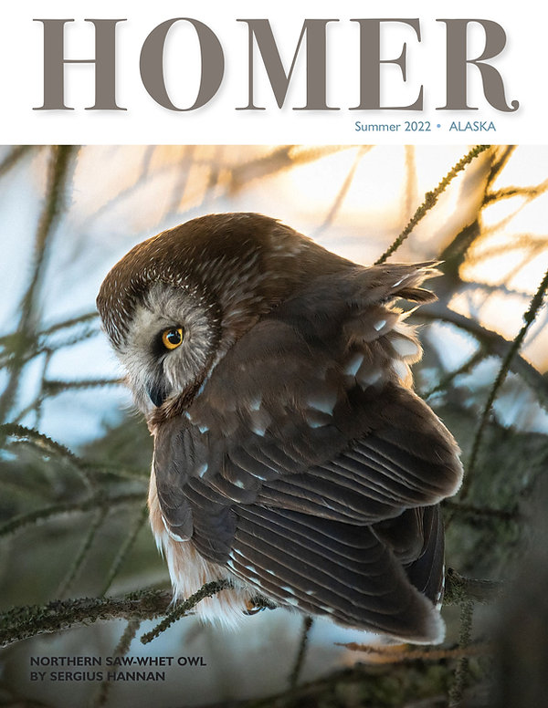 Sergius Hannan owl  Homer Magazine 1.jpg