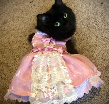 pouf pour chatte 01 - LPM Lolita.png
