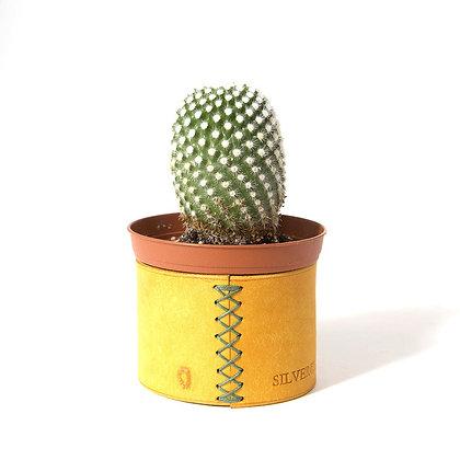 ICHIJIKU (Yellow) - size 1  & 2