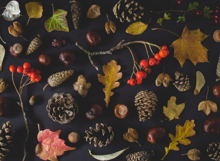 Autumn Activities with your baby