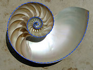 Logarithmic Spiral A-1.jpg