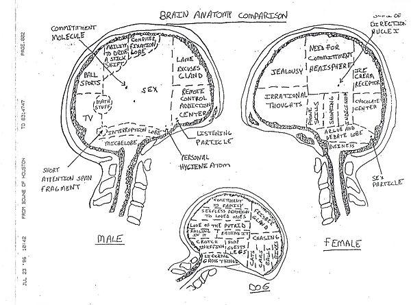 7.4.1. Brain Anatomy Comparison-1.jpeg