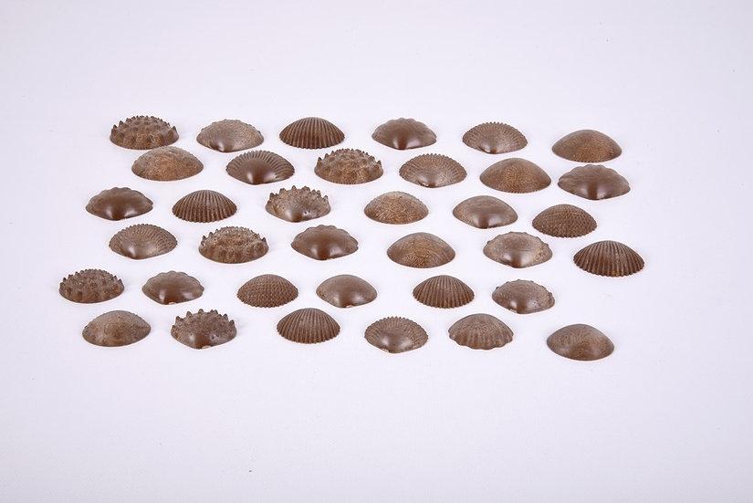 Coquillages tactiles écologiques